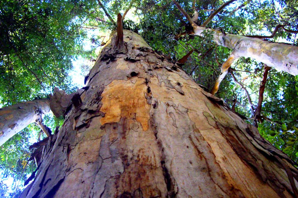Árbol en Jardín Botánico Nacional