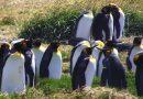 [002] Pingüinos en una bahía inútil