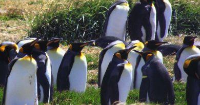 Pingüinos en una bahía inútil