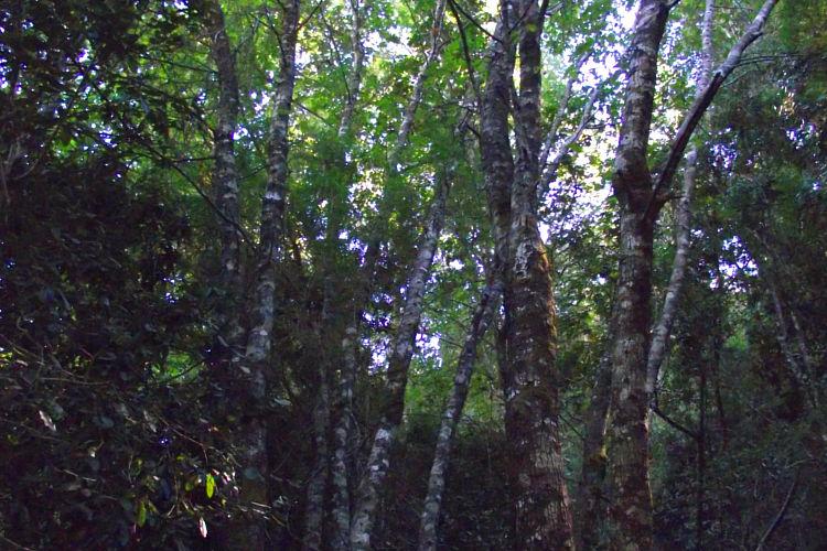 Reserva Nacional Los Ruiles