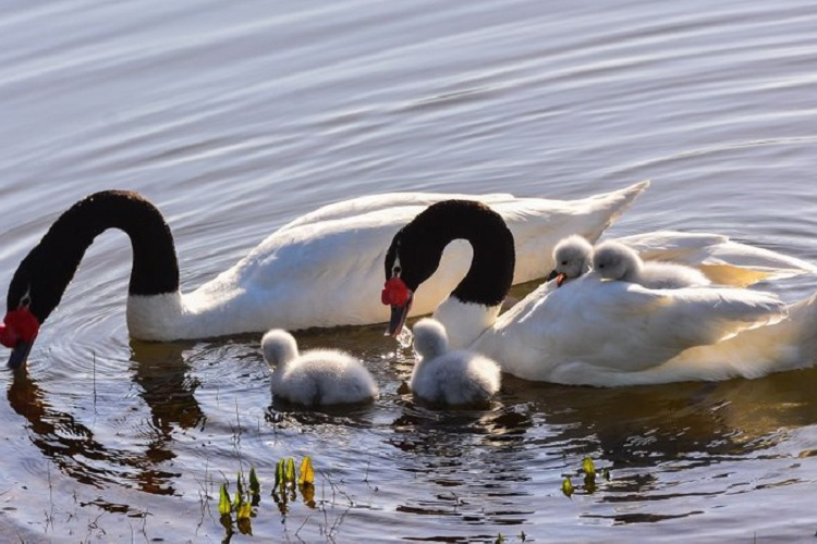 Reserva Nacional Laguna de los Cisnes