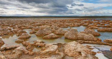 Monumento Natural Laguna de los Cisnes